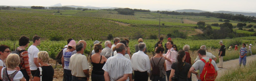 Wine tour with a group at Saint Christol terroir