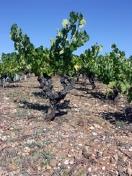 vignebasalte Pézenas et le Pays de Caux