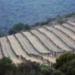 vignesfaugeres 150x150 Le pays des schistes : Faugères et Saint Chinian