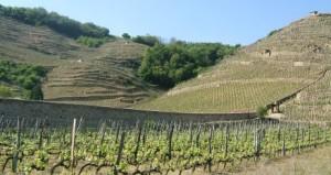 coterotie1bis 300x159 La vallée du Rhône septentrionale