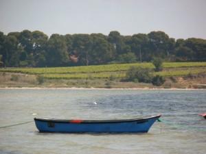 meze vigne1 300x225 Mèze petit port sur létang de Thau au carrefour des crus du Languedoc