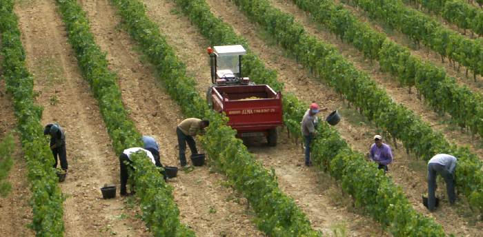 vendanges beaumes Millésime 2012