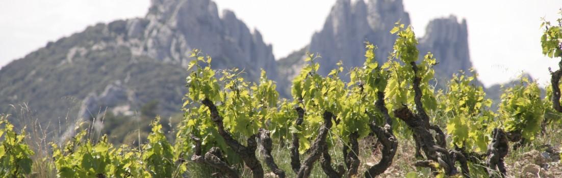 Les Dentelles de Montmirail : beaux paysages et bons vins