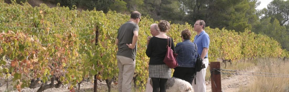 Avant de déguster, la visite des vignes s